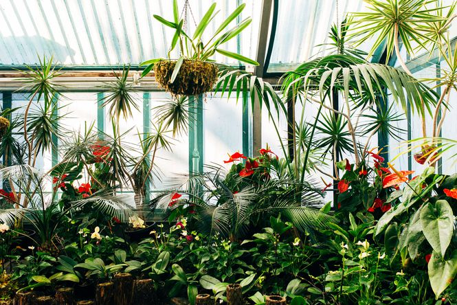 Plants in a glass house.