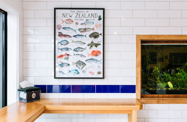 A fish poster on a wall.