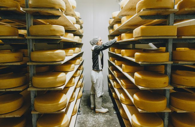 A woman sorting rounds of cheese in the factory at at Barrys Bay Cheese, Akaroa.