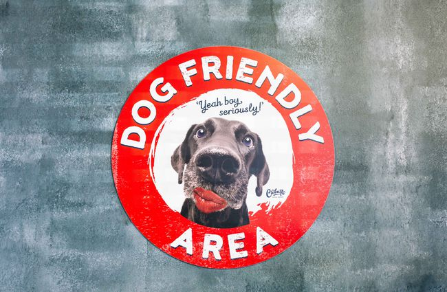 Dog friendly area sign on a wall.