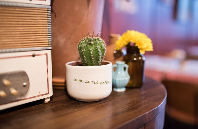 Mini cactus on a wooden table.