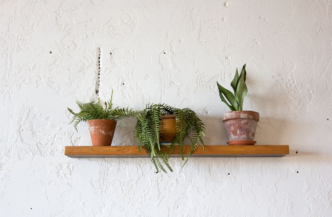 Plants against a white wall on a wooden shelf.