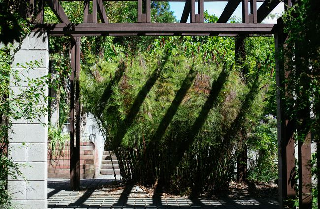 Wooden archway casting shadow on bushes.