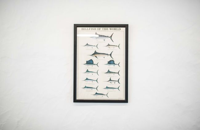Framed fish poster against a white wall.