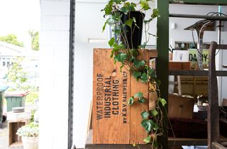 Plant hanging over a wooden crate.
