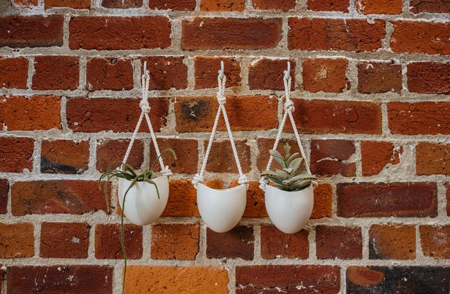 White hanging plants against a brick wall.