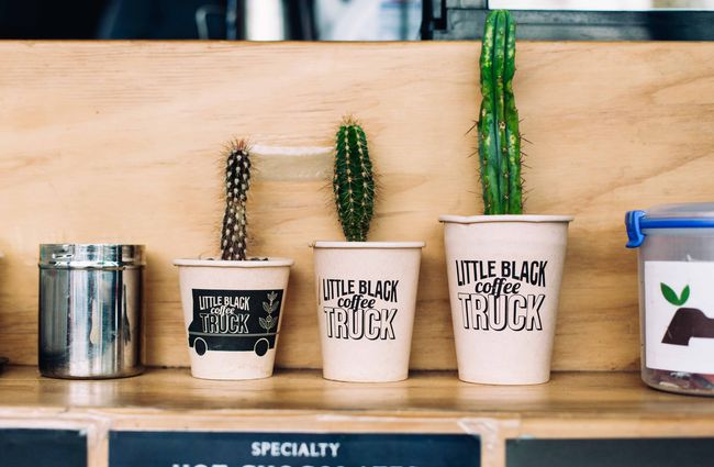 Cactuses growing in coffee cups on a shelf.