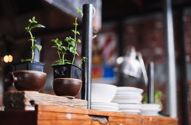 Close up of small plants on a counter at at Lyttelton Coffee Company cafe.