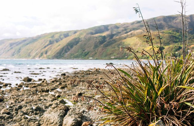 Tussock and rocks along the beach.