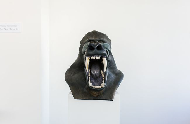 A head of an angry gorilla.