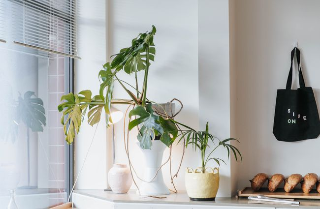 A plant in a window.