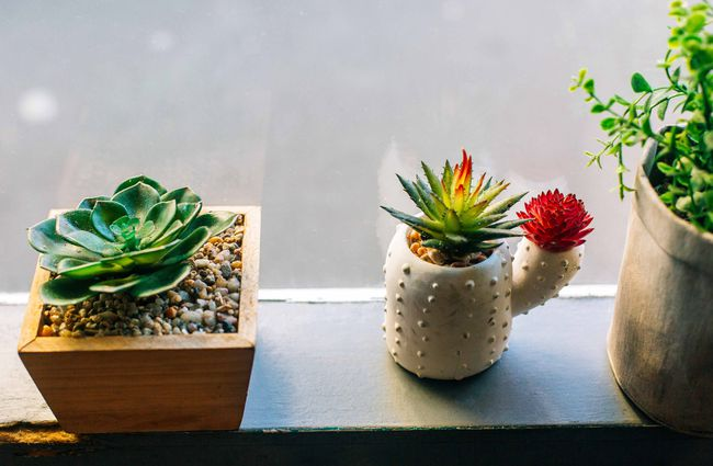 Little cactuses on windowsill.