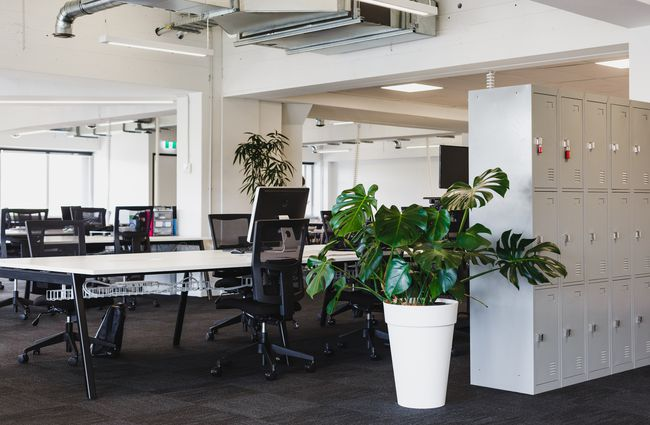 Open plan office with green plants.