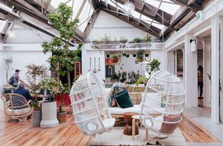 A courtyard full of plants with two hanging white chairs.